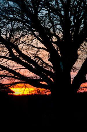 Eiche, Sonnenuntergang, Glückseligkeit