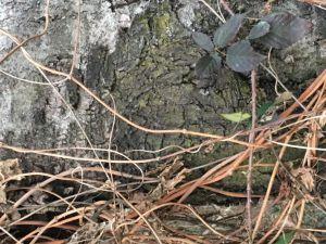 Natur, Baum,Rinde,Gestrüpp,